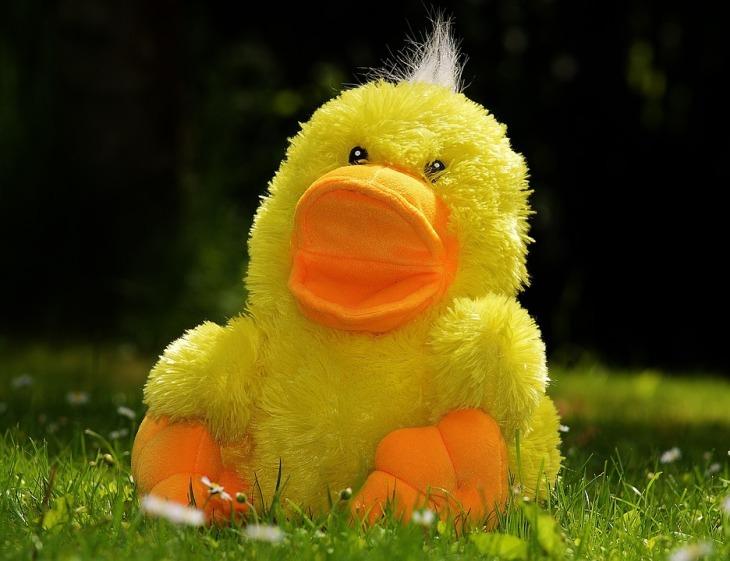 duck-783684_960_720