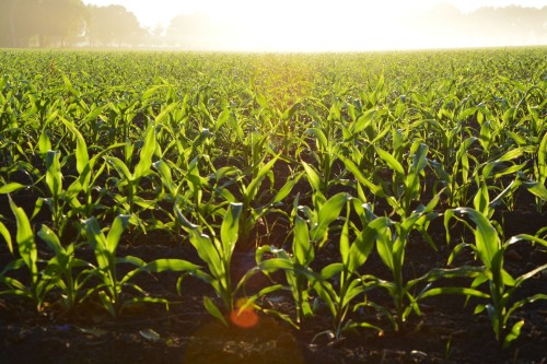 crop.jpeg